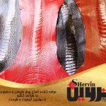 صادرات چرم شترمرغ مرغوب ایران