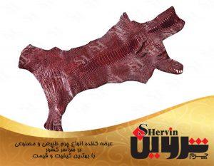 تولید پوست چرم شترمرغ